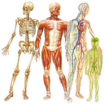 ۱۴واقعیت شگفتانگیز درباره بدن انسان